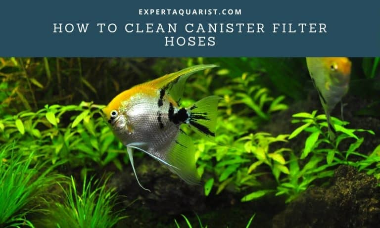 Three Tips On How To Clean Canister Filter Hoses