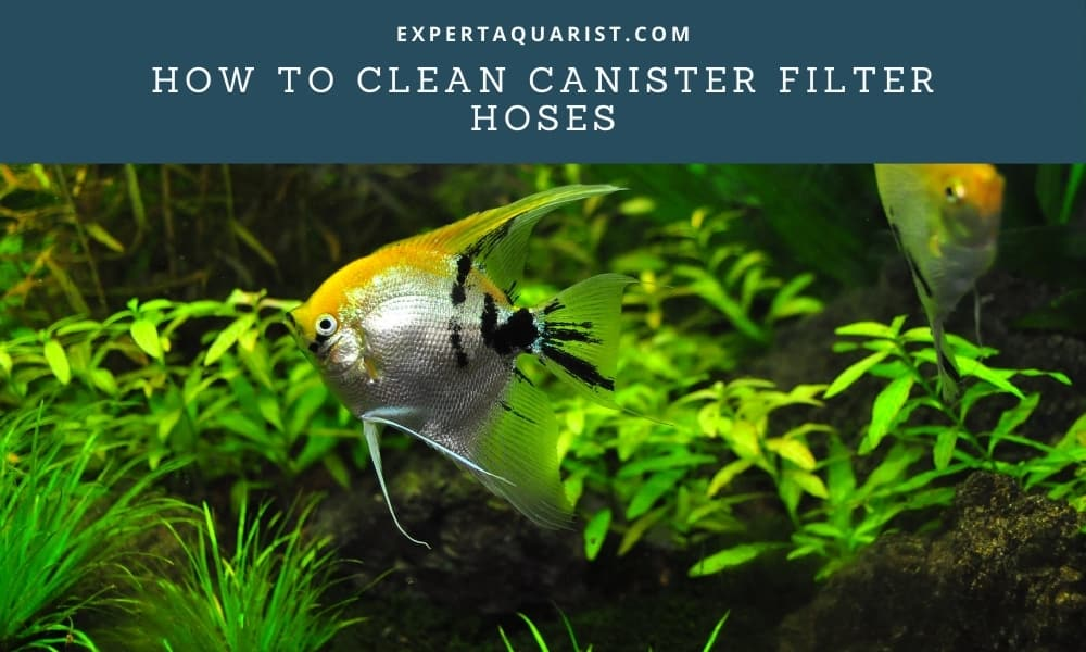 How To Clean Canister Filter Hoses