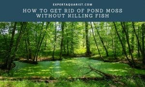 How To Get Rid Of Pond Moss Without Killing Fish