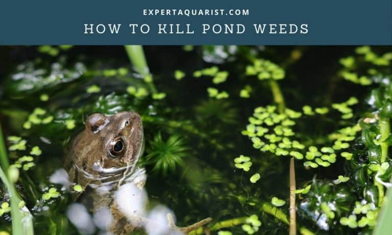 How To Kill Pond Weeds