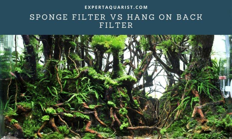 Sponge Filter Vs Hang On Back Filter: Which One You Should Pick?