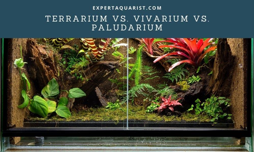 Terrarium Vs. Vivarium Vs. Paludarium