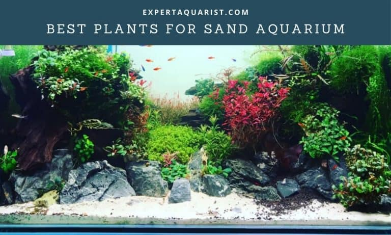 Best Plants For Sand Aquarium