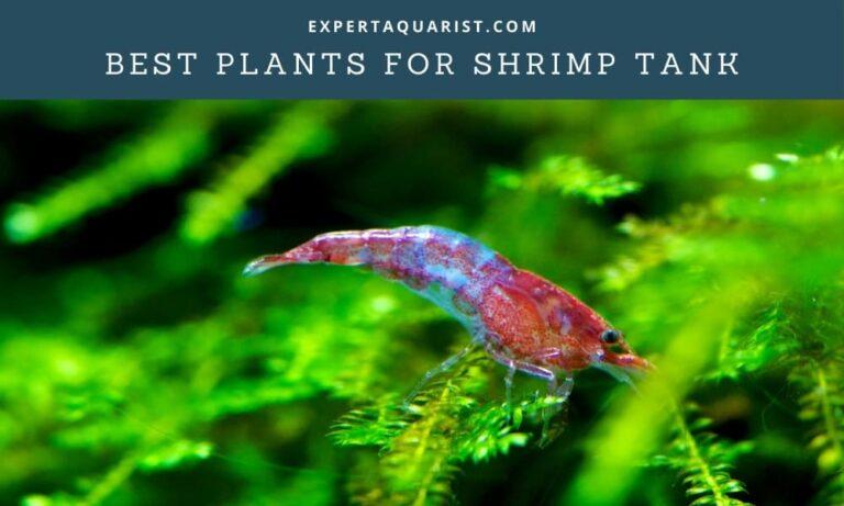 10 Best Plants for Shrimp Tank