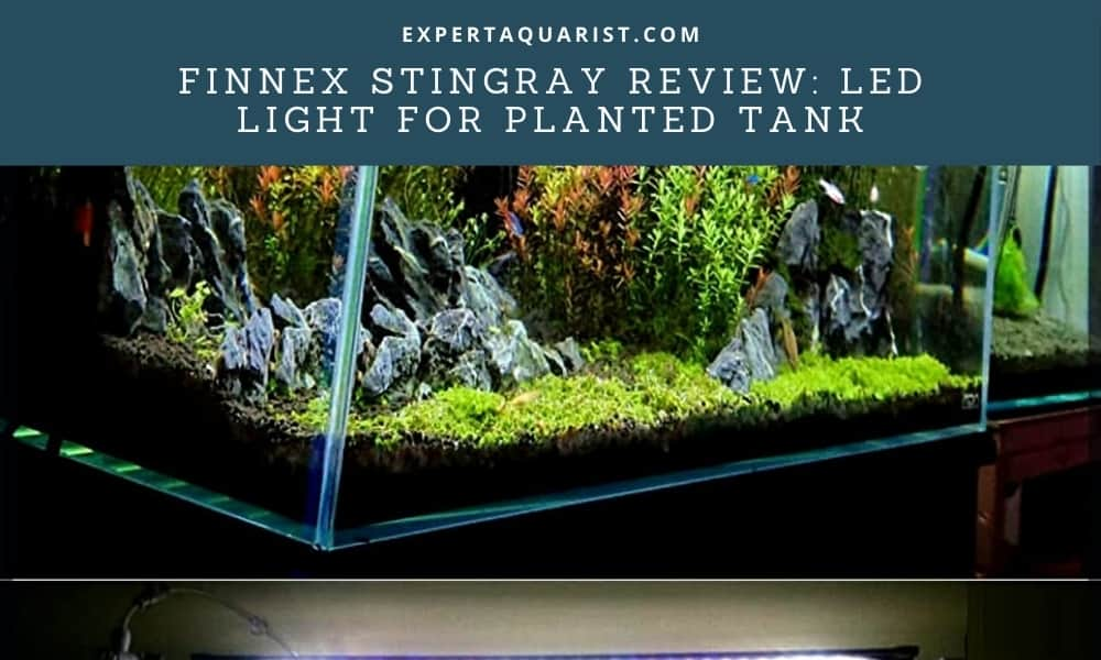 Finnex Stingray Review LED Light For Planted Tank