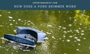 How Does A Pond Skimmer Work