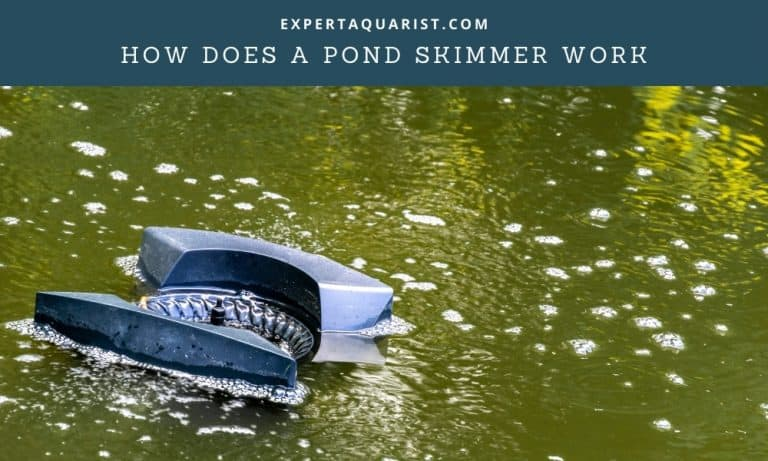 How Does A Pond Skimmer Work: Everything You Need To Know About Pond Skimmers