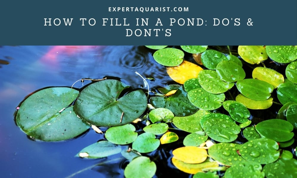 How To Fill In A Pond