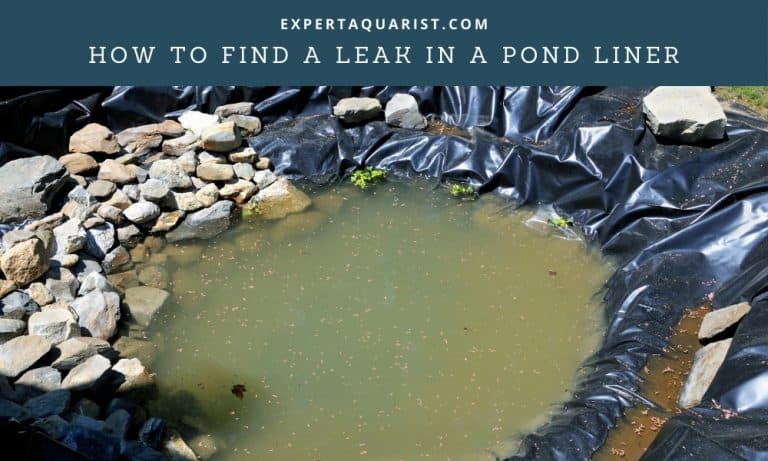 How To Find A Leak In A Pond Liner Easily