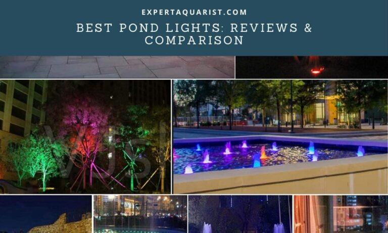 Best Pond Lights: Submersible, Solar & LED Lights