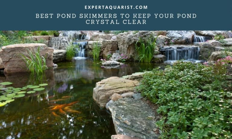 Best Pond Skimmers To Keep Your Pond Crystal Clear