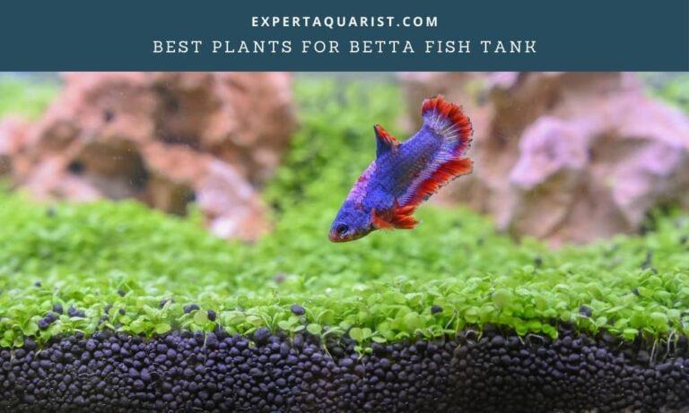 Best Plants For Betta Fish Tank