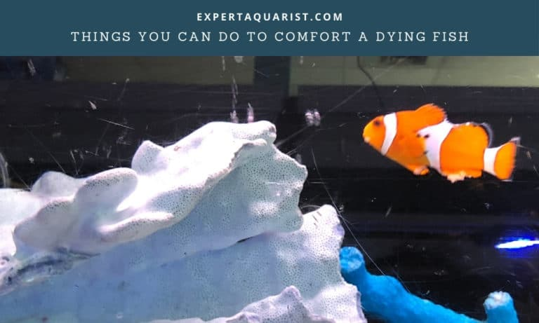 How To Comfort A Dying Fish: 11 Things You Can Do Right Away