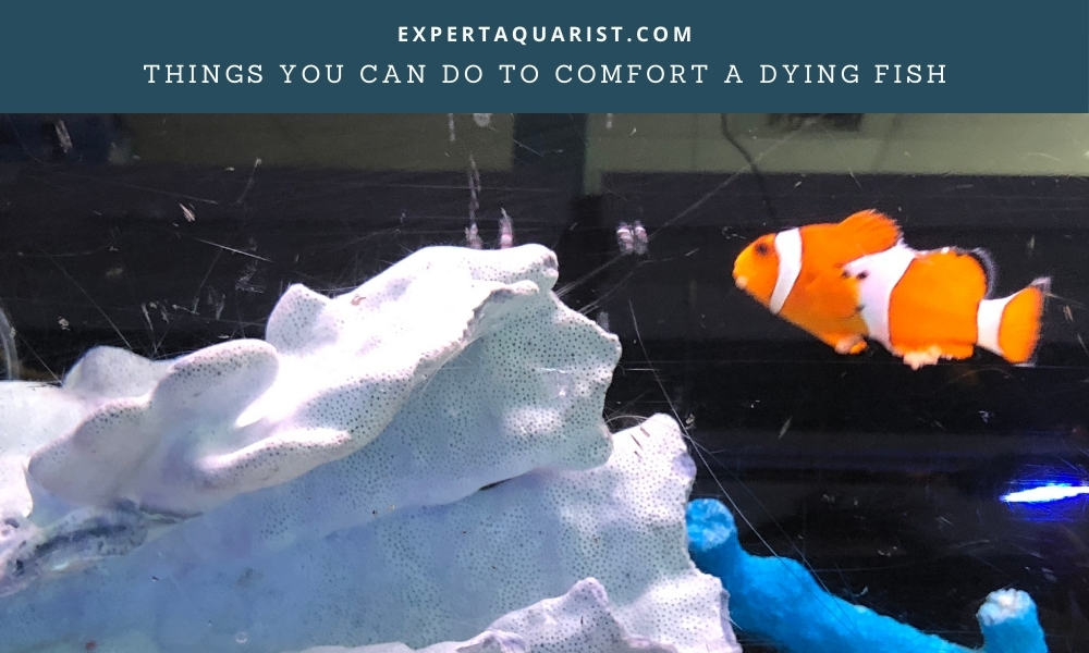 Things you can do to comfort a dying fish