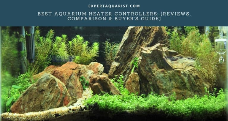 Top 6 Best Aquarium Heater Controllers: [Reviews, Comparison And Extensive Buyer's Guide]