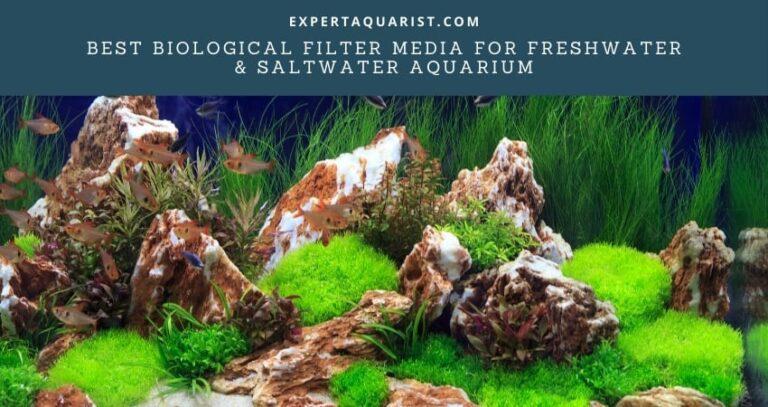 Best Biological Filter Media For Freshwater & Saltwater Aquarium