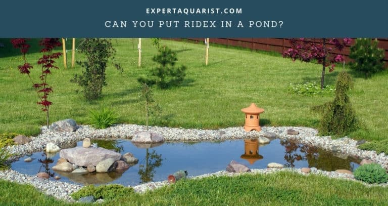 Can You Put Ridex In A Pond?