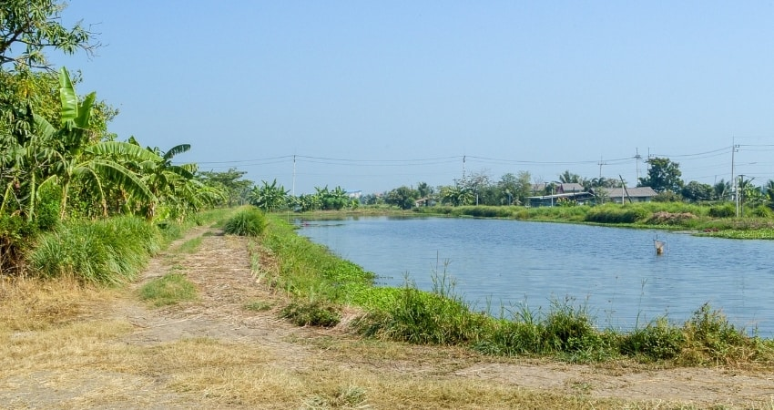 Cost to build a fishing pond