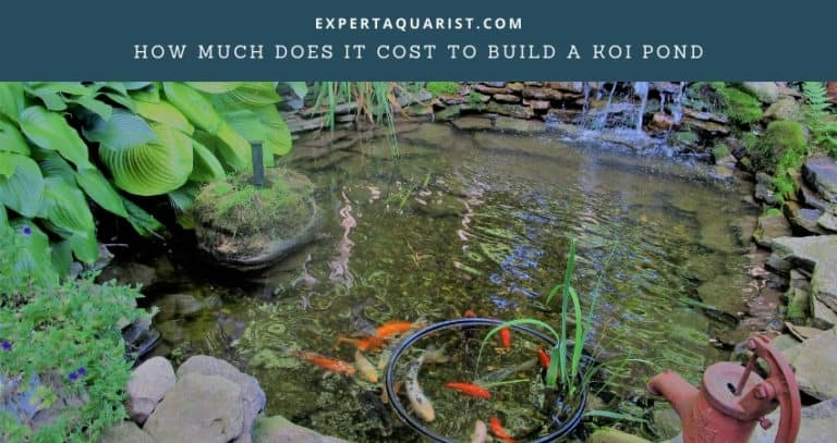 How Much Does It Cost To Build A Koi Pond