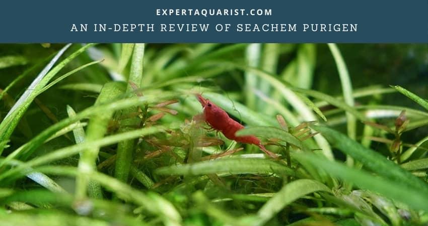 Seachem Purigen Review