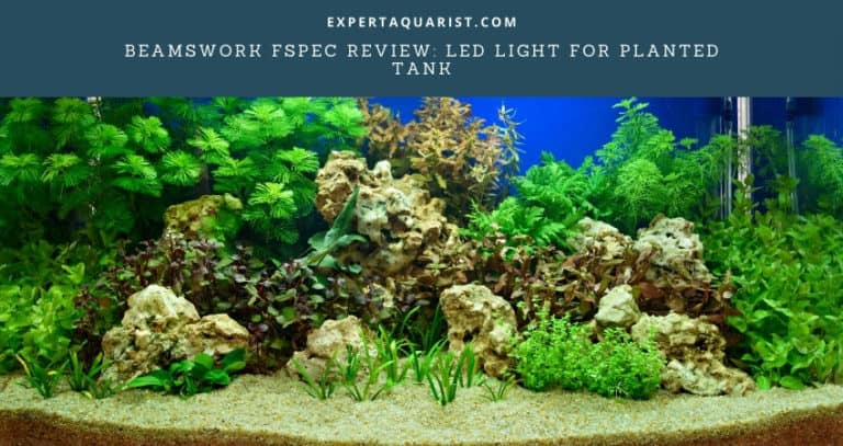 Beamswork FSPEC Review: LED Light for planted tank