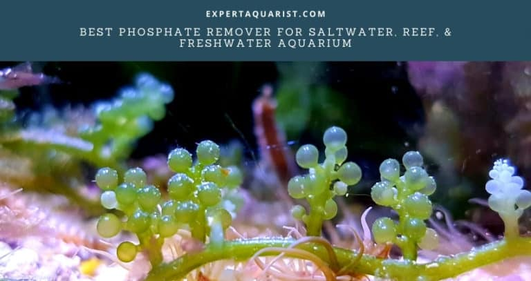 Best Phosphate Remover For Saltwater, Reef, & Freshwater Aquarium