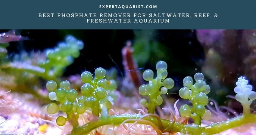 Best Phosphate Remover