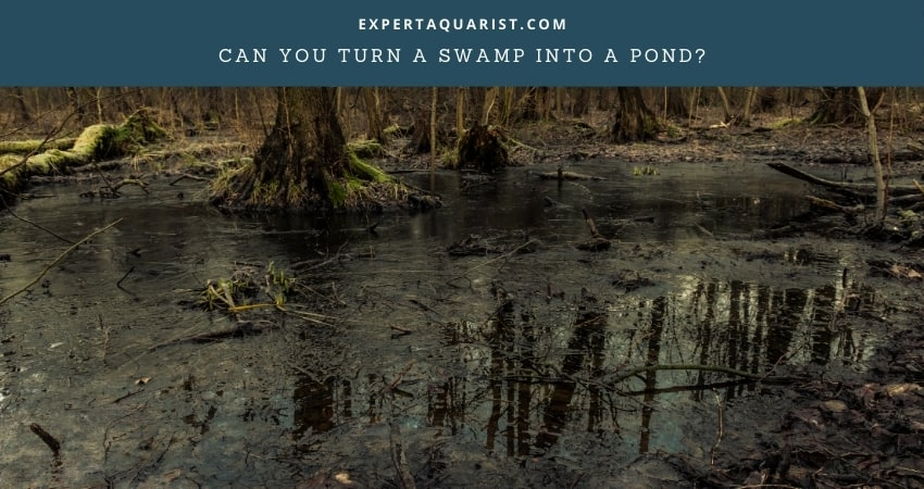 Can You Turn A Swamp Into A Pond