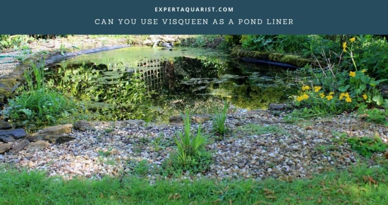 Can You Use Visqueen As A Pond Liner?