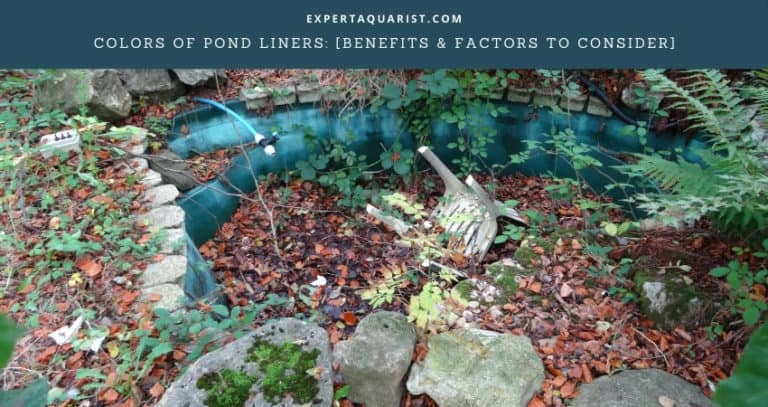 Do Pond Liners Come In Different Colors?