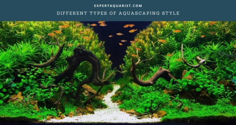 Different Types of Aquascaping Style Explained