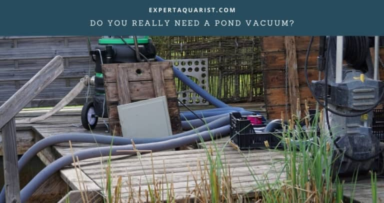 Do You Really Need A Pond Vacuum?