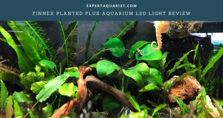 Finnex Planted Plus Review
