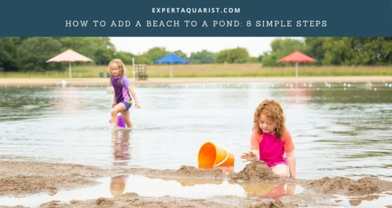 How To Add A Beach To A Pond: (Beach In Your Backyard!)