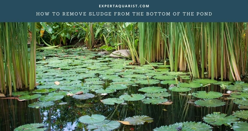 How To Remove Sludge From The Bottom Of The Pond