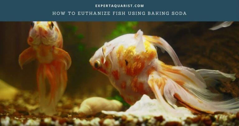 How to Euthanize Fish Using Baking Soda