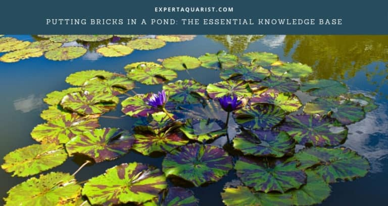 Putting Bricks in a Pond: The Essential Knowledge Base
