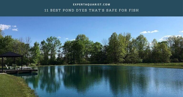 11 Best Pond Dyes That's Safe For Fish: Reviews & Comparison