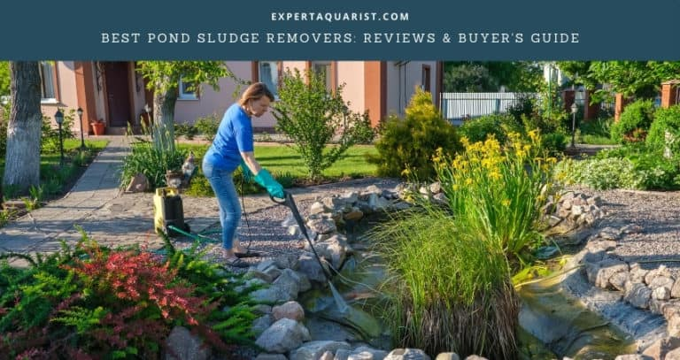 Best Pond Sludge Removers: Reviews & Buyer's Guide