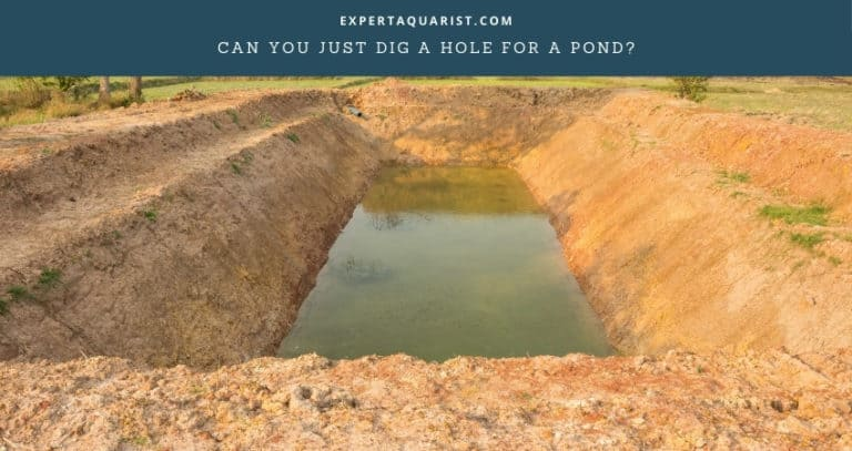 Can I Just Dig A Hole For A Pond?