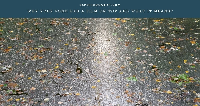 Causes of Pond Films And How To Get Rid of It
