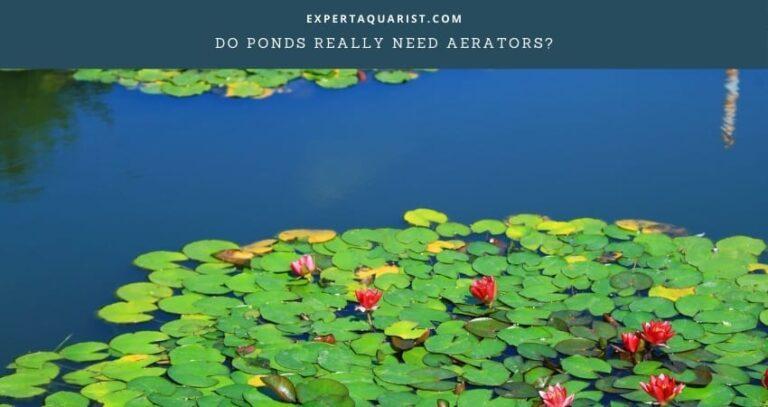 Do Ponds Really Need Aerators?