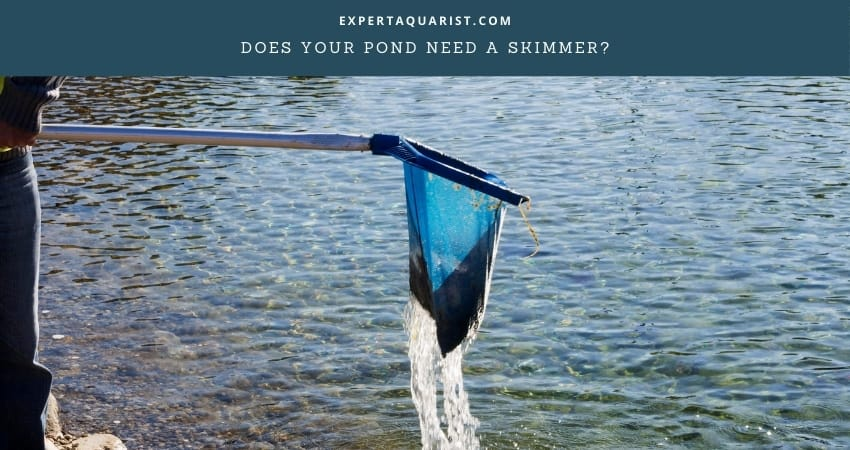 Does Your Pond Need A Skimmer