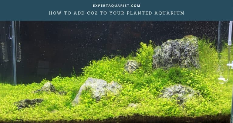 How To Add CO2 To Your Planted Aquarium