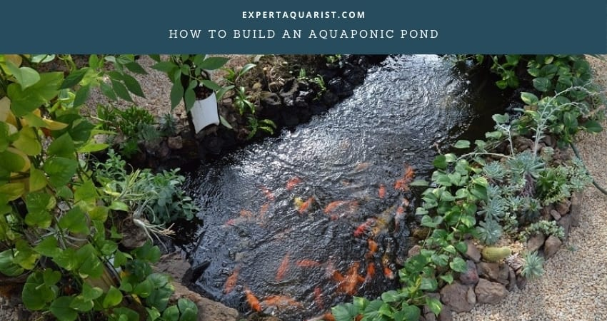 How To Build An Aquaponic Pond