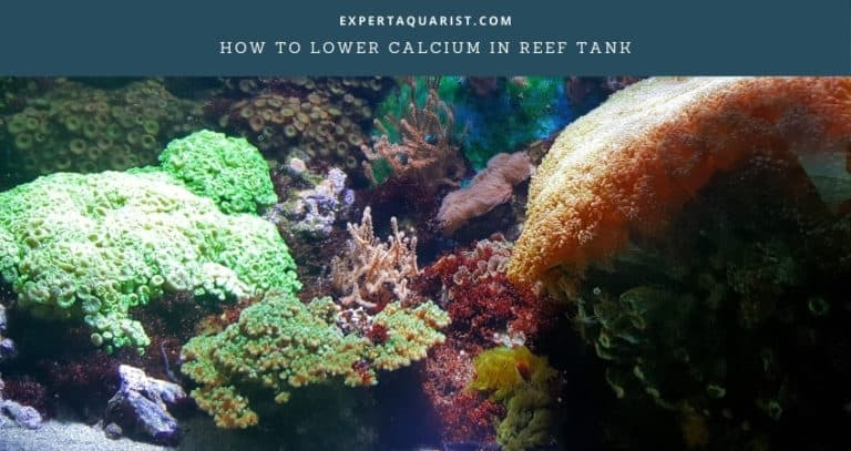How To Lower Calcium In Reef Tank