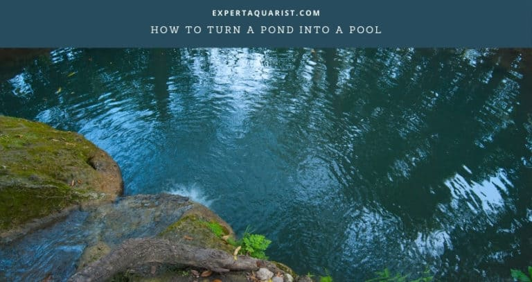 How to Turn a Pond into a Pool