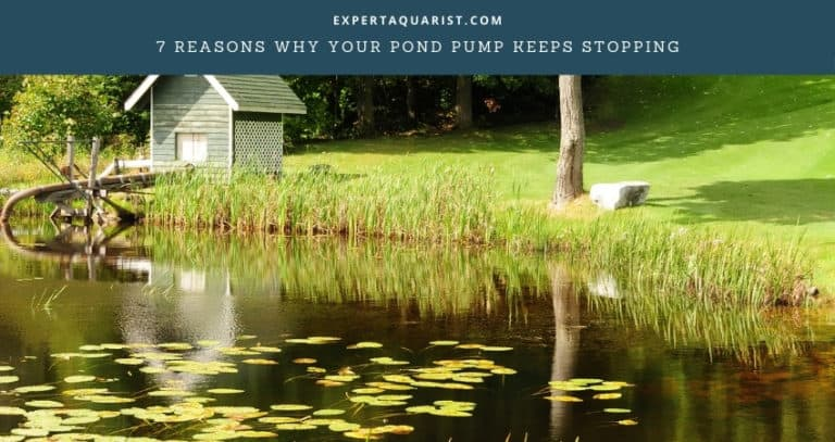 7 Reasons Why Your Pond Pump Keeps Stopping